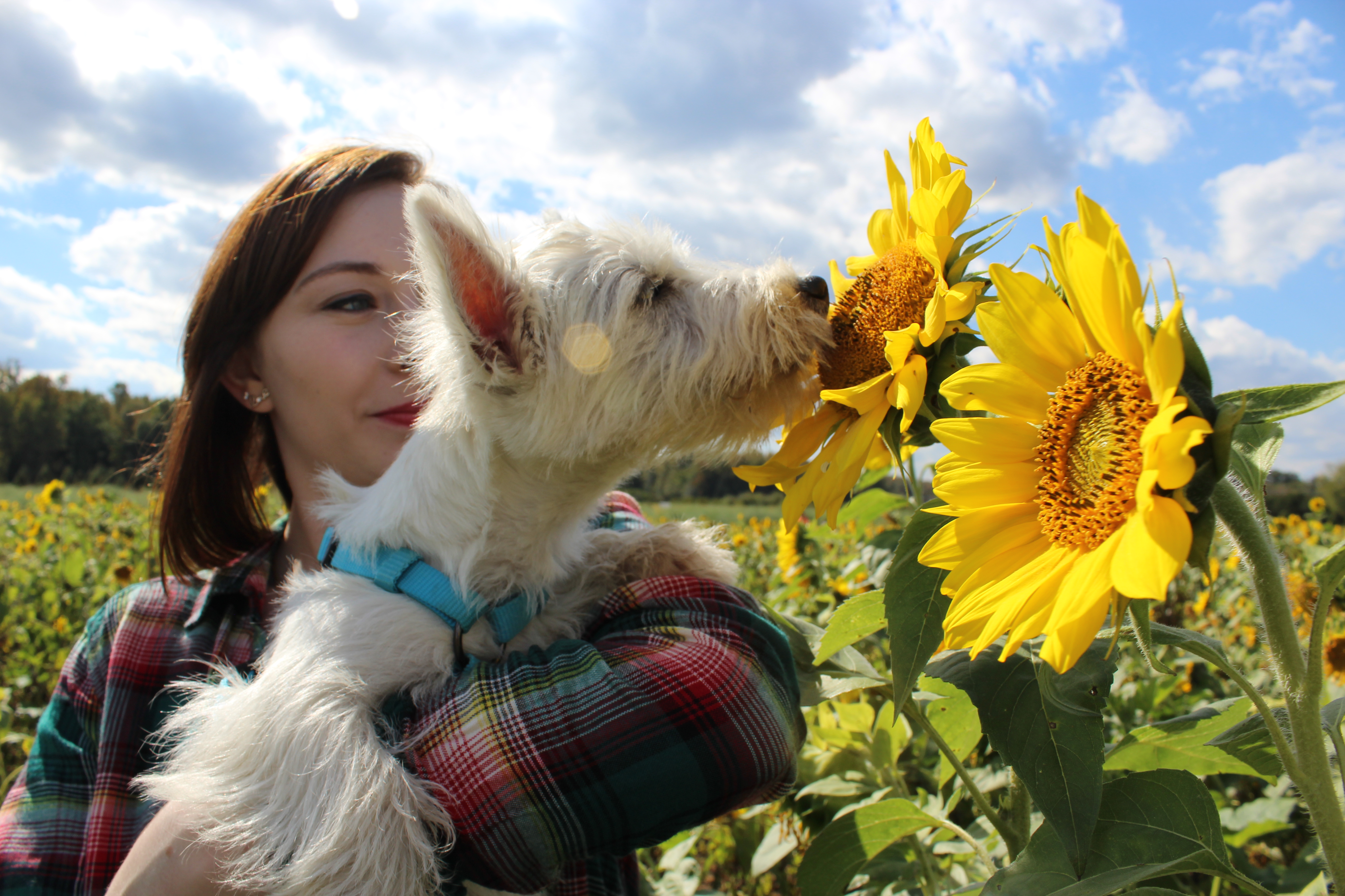 A picture of my dog Sophie as a puppy sniffing a sunflower as i hold her up next to it